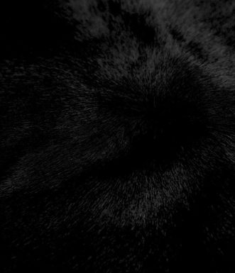 black-pic-1