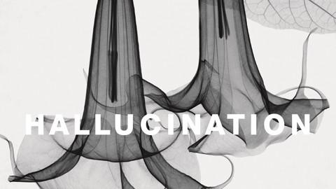 portfolio-hallucination
